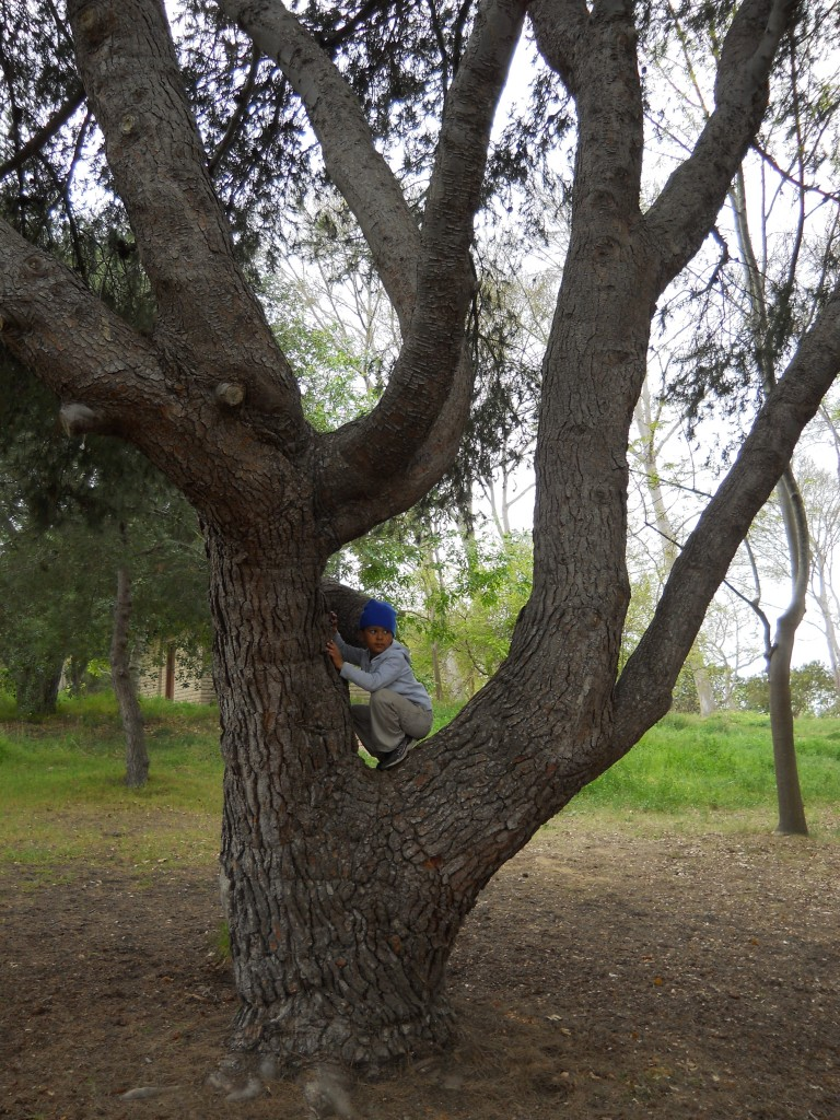 dom in tree